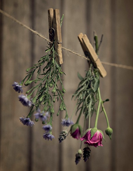 casa-jardin