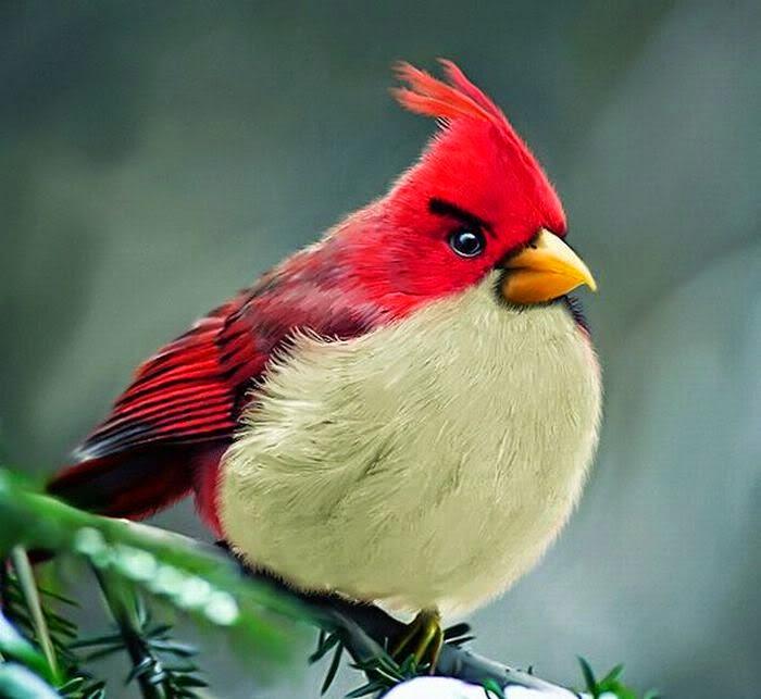 Las aves con el ruido se ponen en vigilancia y comen menos. radioeduca.com